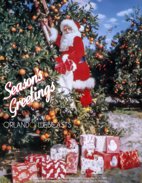 Santa in a Florida orange grove.